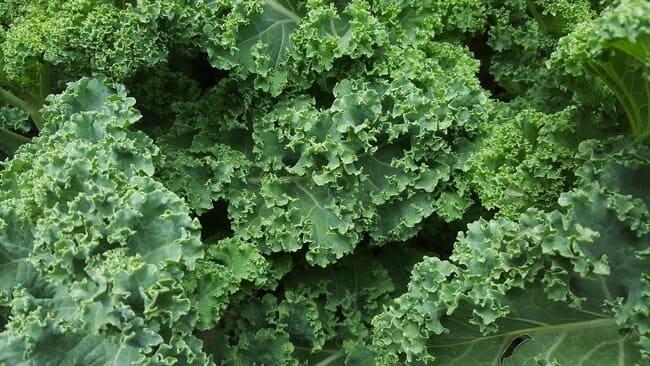 Kale-tipos-de-lechugas